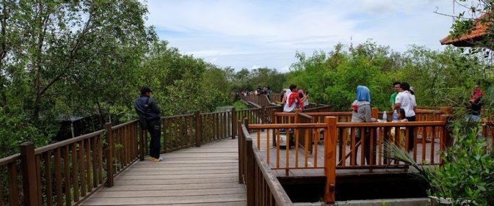 Pesona keindahan hutan mangrove ditengah kota Surabaya
