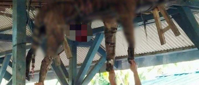 Seekor Harimau Dibunuh Secara Sadis di Sumut